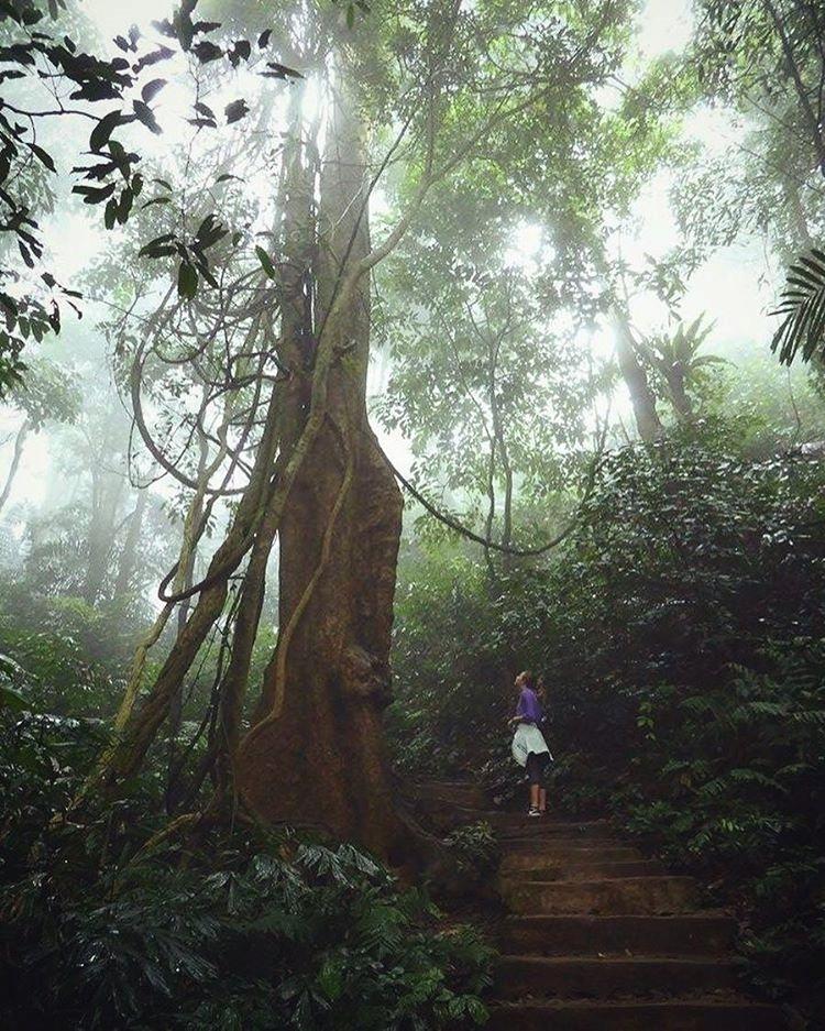 15 cung duong trekking dep nhat Viet Nam nen di vao dip le 29 - 13