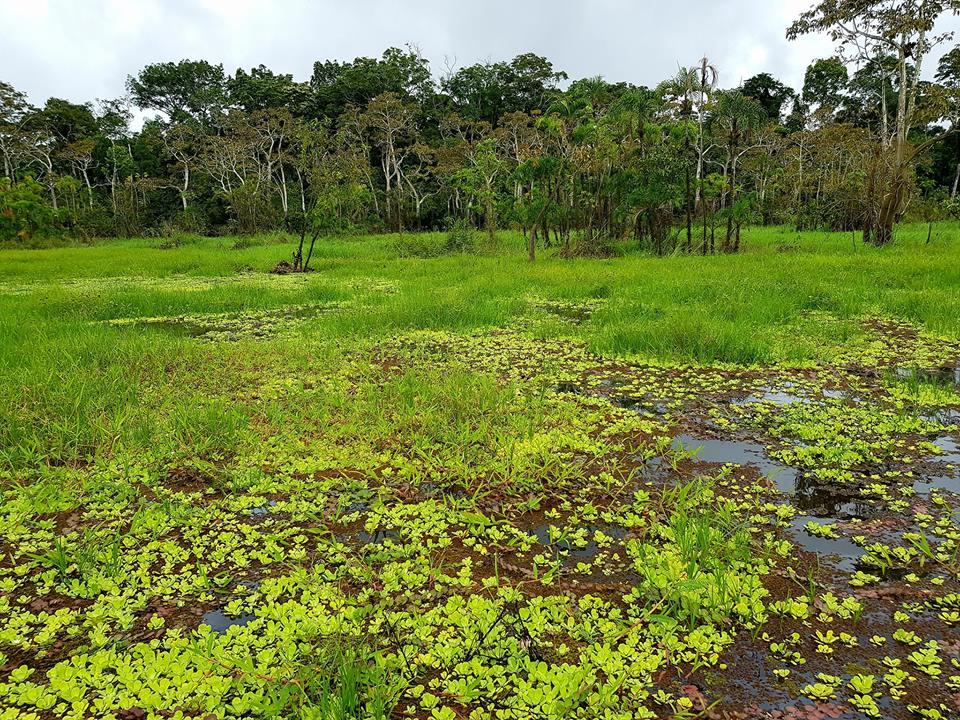 Tran Dang Dang Khoa lac troi giua rung Amazon voi nhung bi an day thu vi - 10